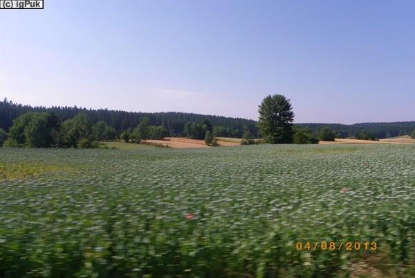 Mohnfeld bei Ottenschlag