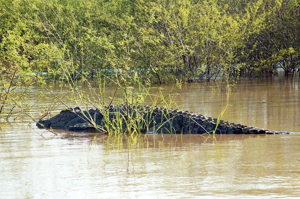 Krokodil im Lake Chamo