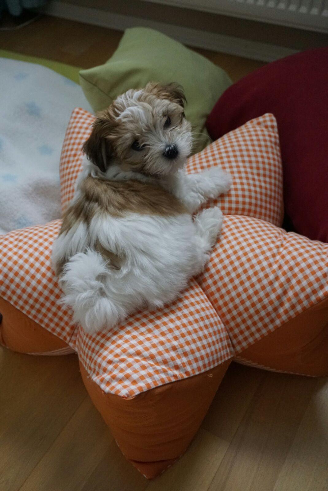Cassy-Elli, im neuen Zuhause