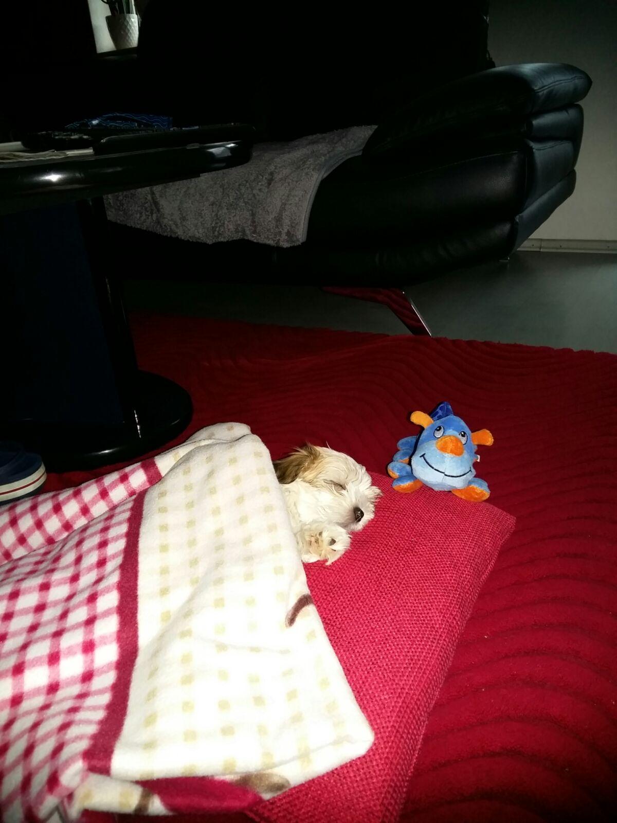 Chibi - Amy, im neuen zuhause