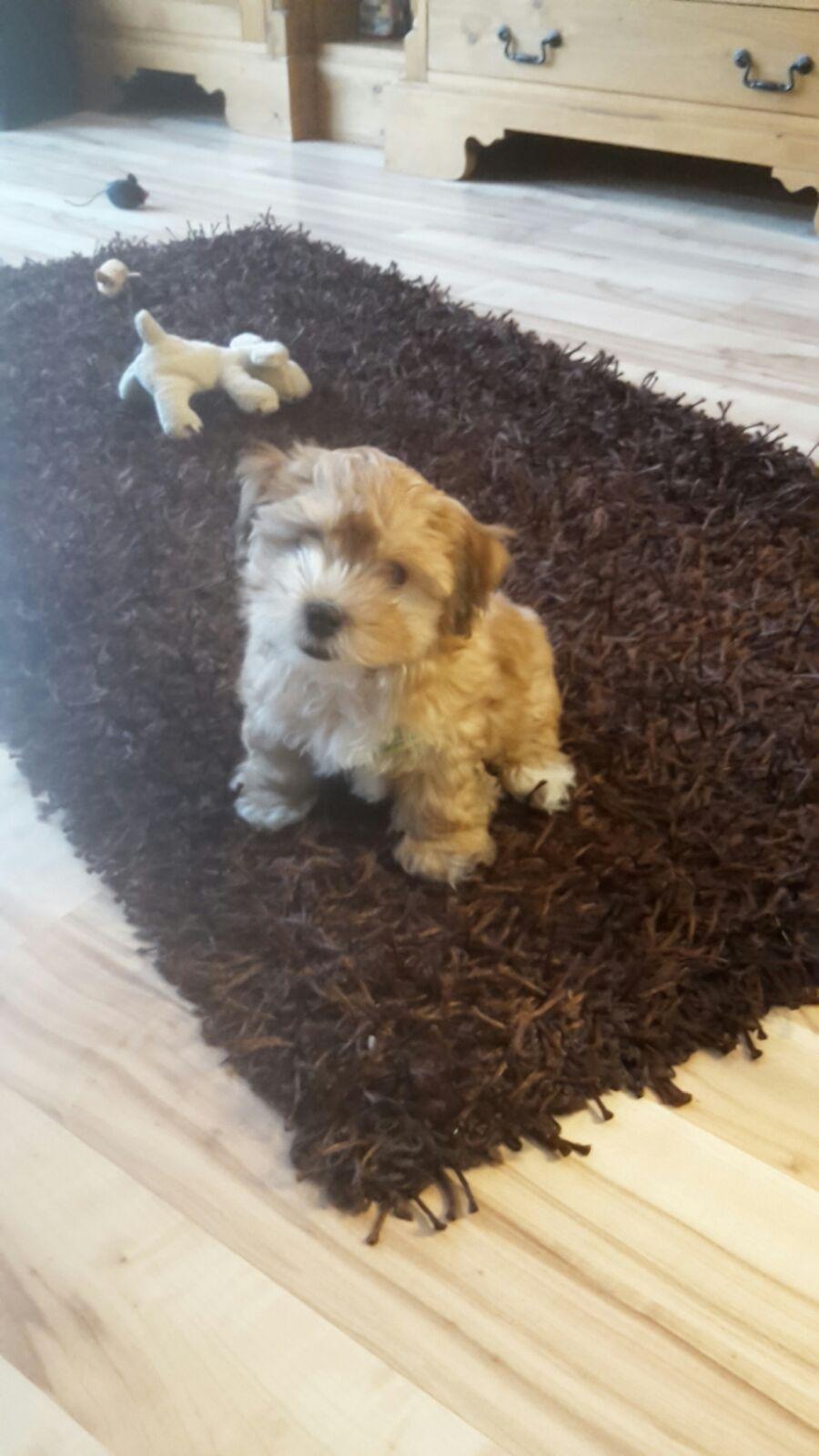 Cookie/ Pepe im neuen Zuhause