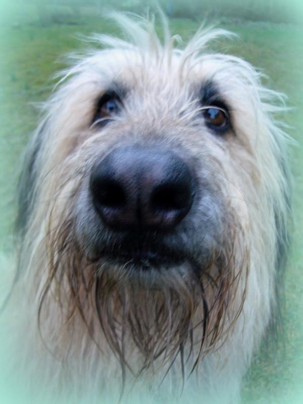 Chico, warum hast du so eine grosse Nase? Damit ich besser riechen kann!