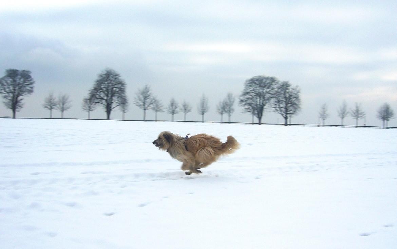 """Chico :"""" In den Schnee setz ich dieses Frühjahr keine Pfote mehr!"""""""