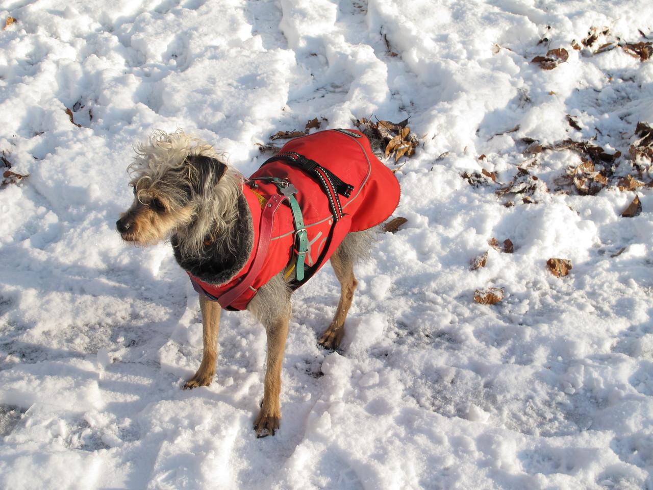 Paris liebt den Schnee nicht wirklich, trotz Mantel.