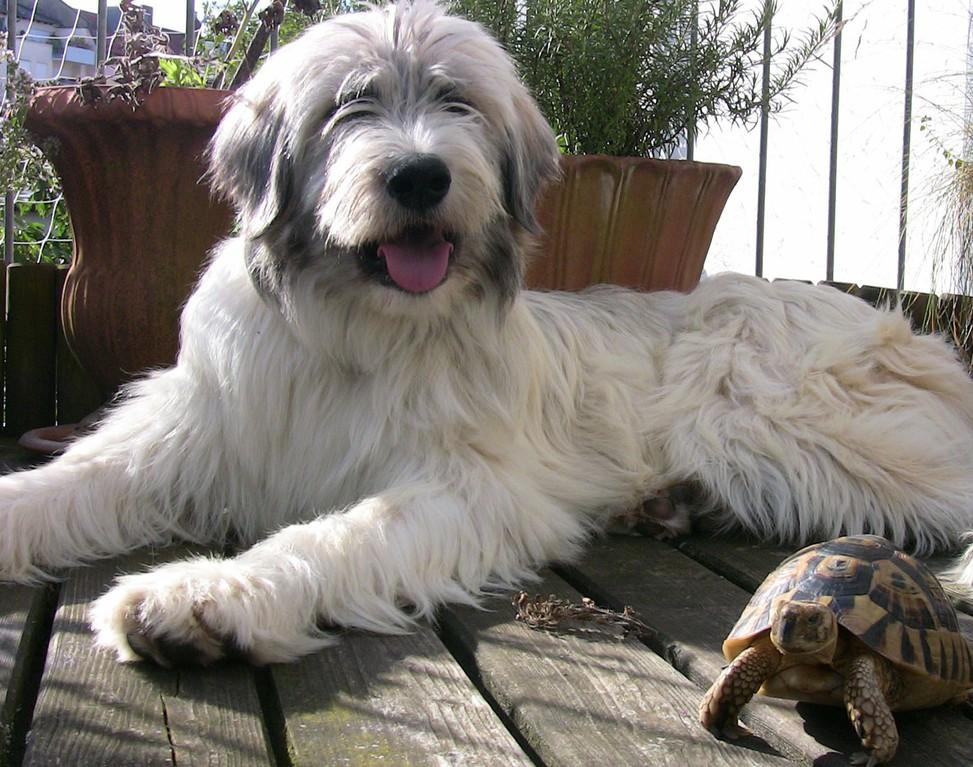 Bartolo, der Schildkröten-Versteher