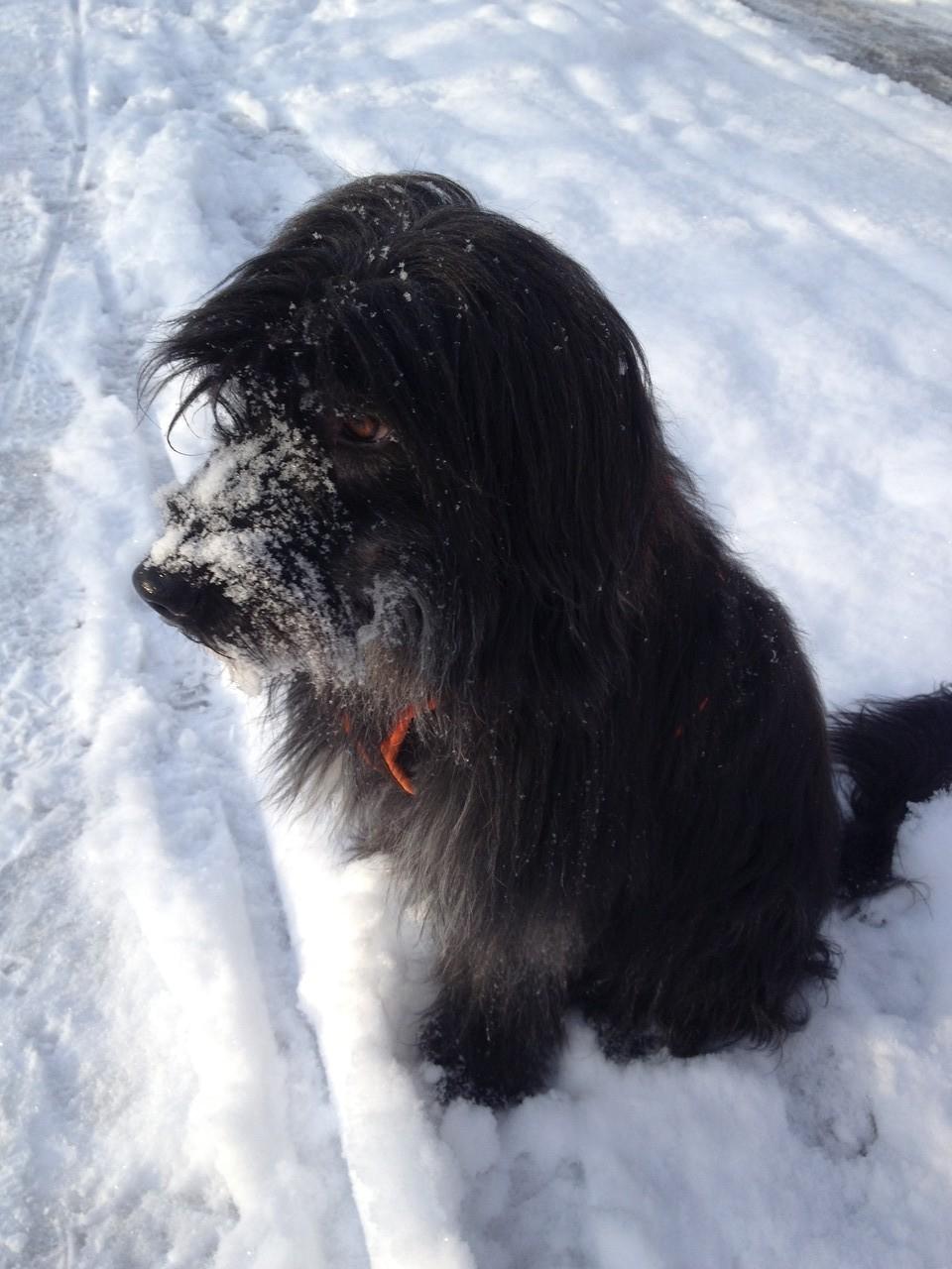 Meine Süßen und Thomas beim ersten Spaziergang im Schnee.