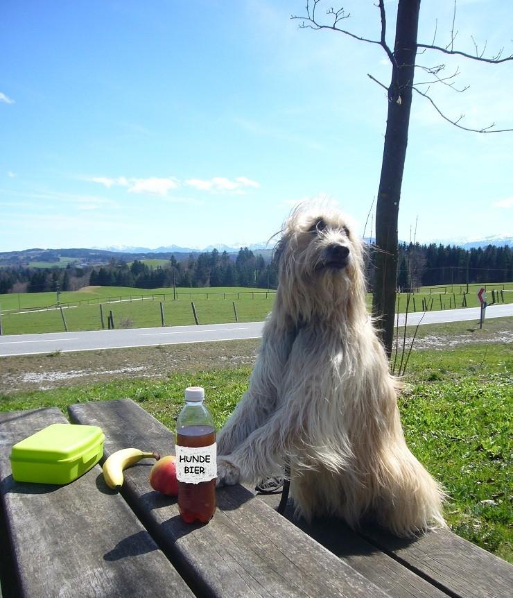 Chico macht ein Picknick