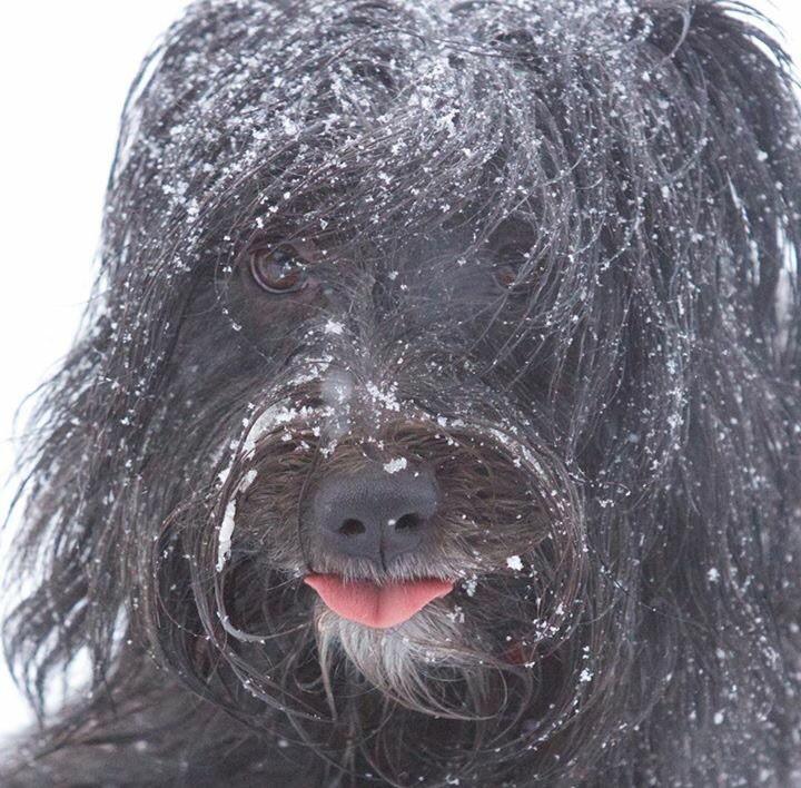Amy im Schnee! Guten Rutsch ins Jahr 2015!
