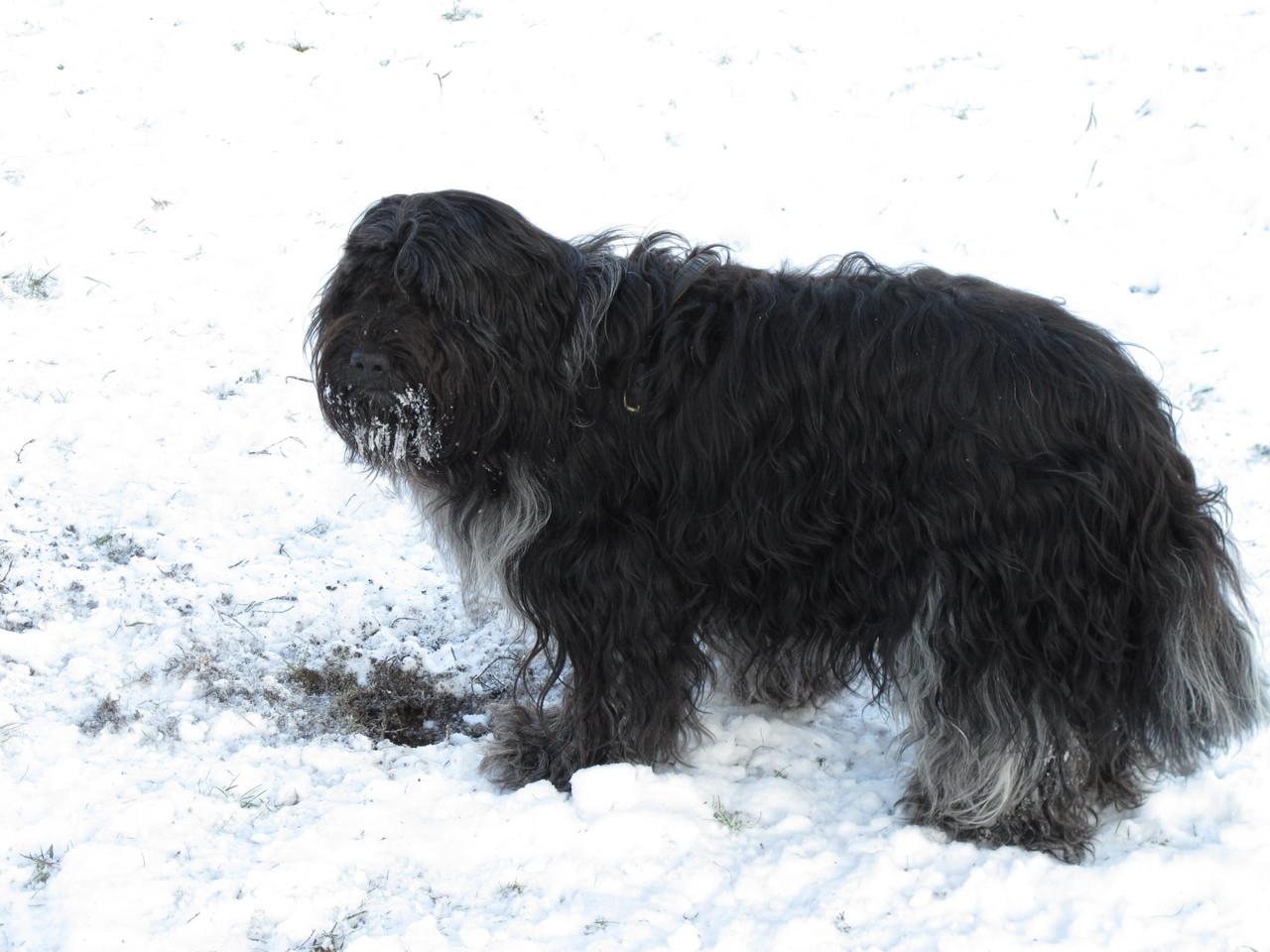 Auch Luke genießt das Winterwetter.
