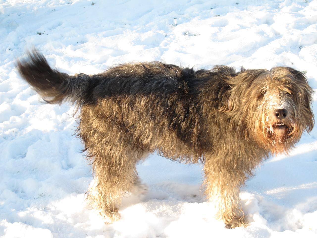 Bart findet Schnee einfach nur toll.