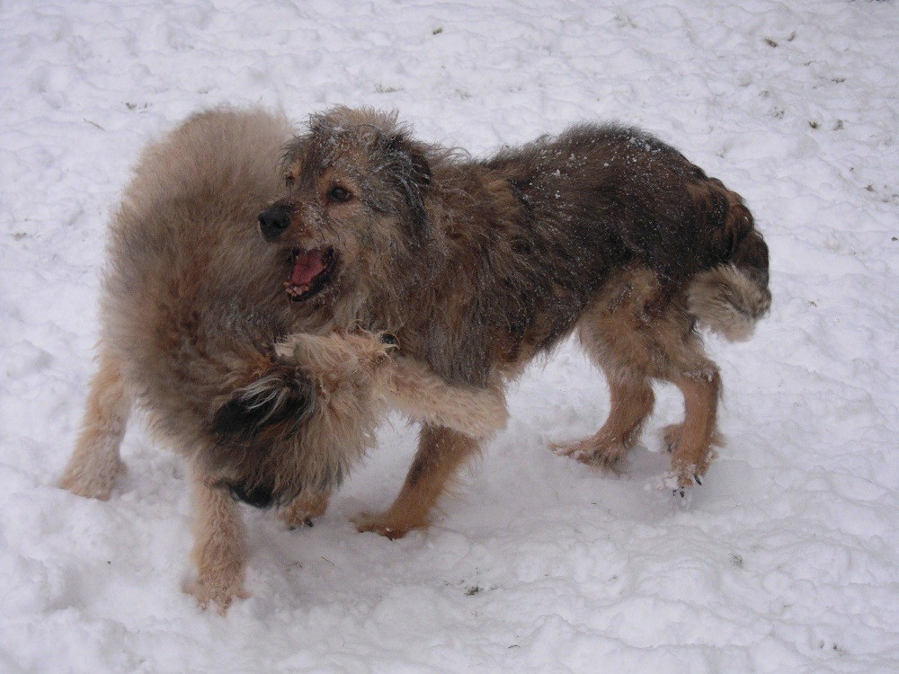 Tara & Leon im Schnee