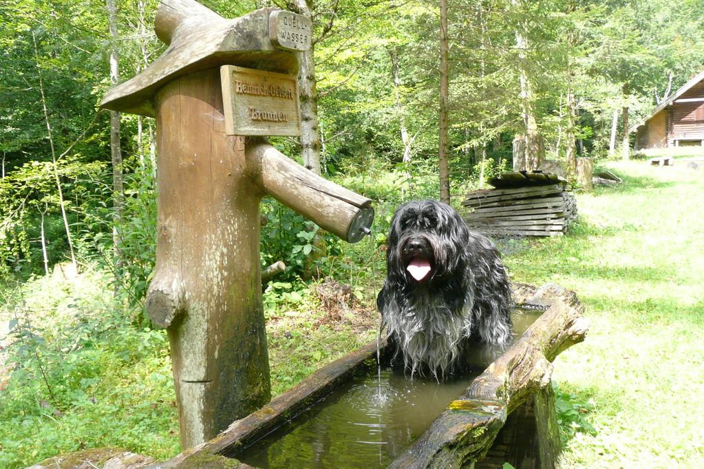 Luke beim kühlen Bad im Brunnen