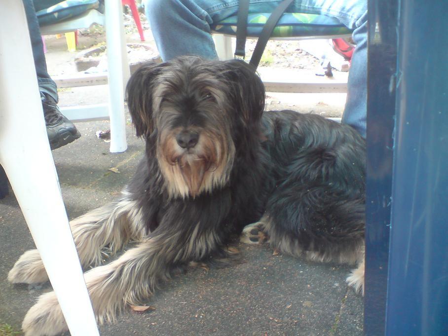 Buddy unter dem Tisch...