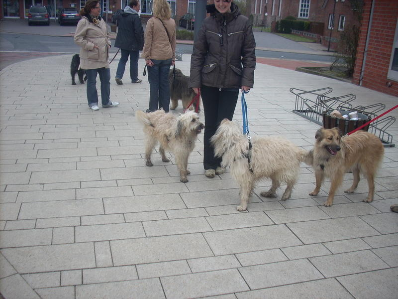 Kira, Julia, Carlito, Pheeby