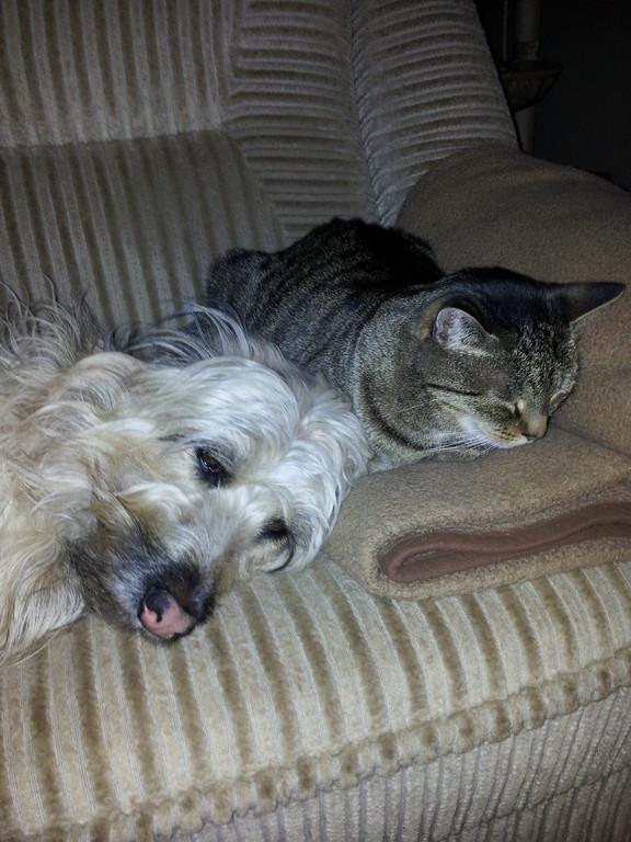 Kira und ihr Katzenkumpel Werner