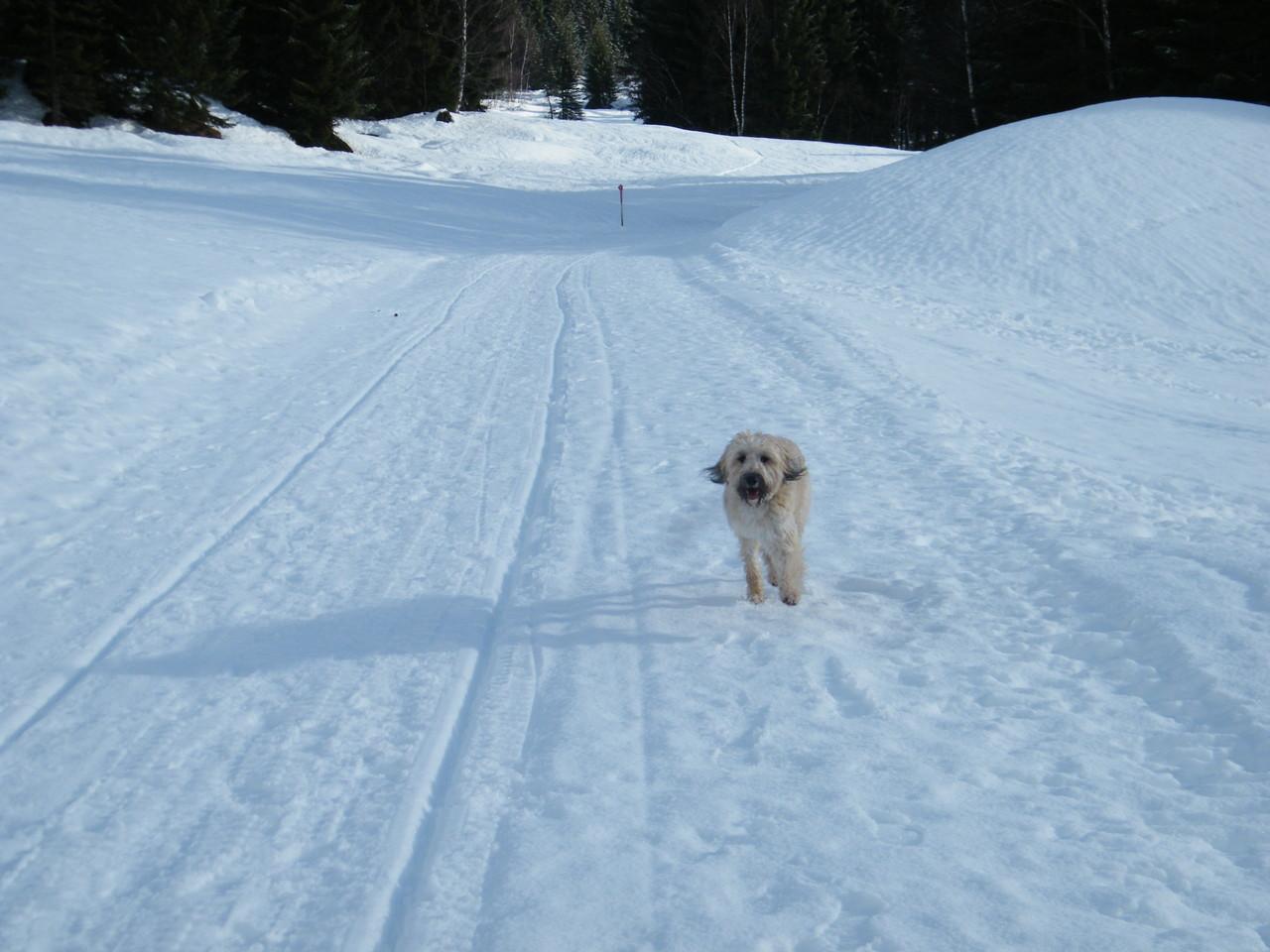 Mila's erster Urlaub in den Bergen :-)