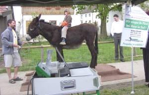 """""""Eselswaage"""" beim Eseltreffen in Bad Wörishofen"""
