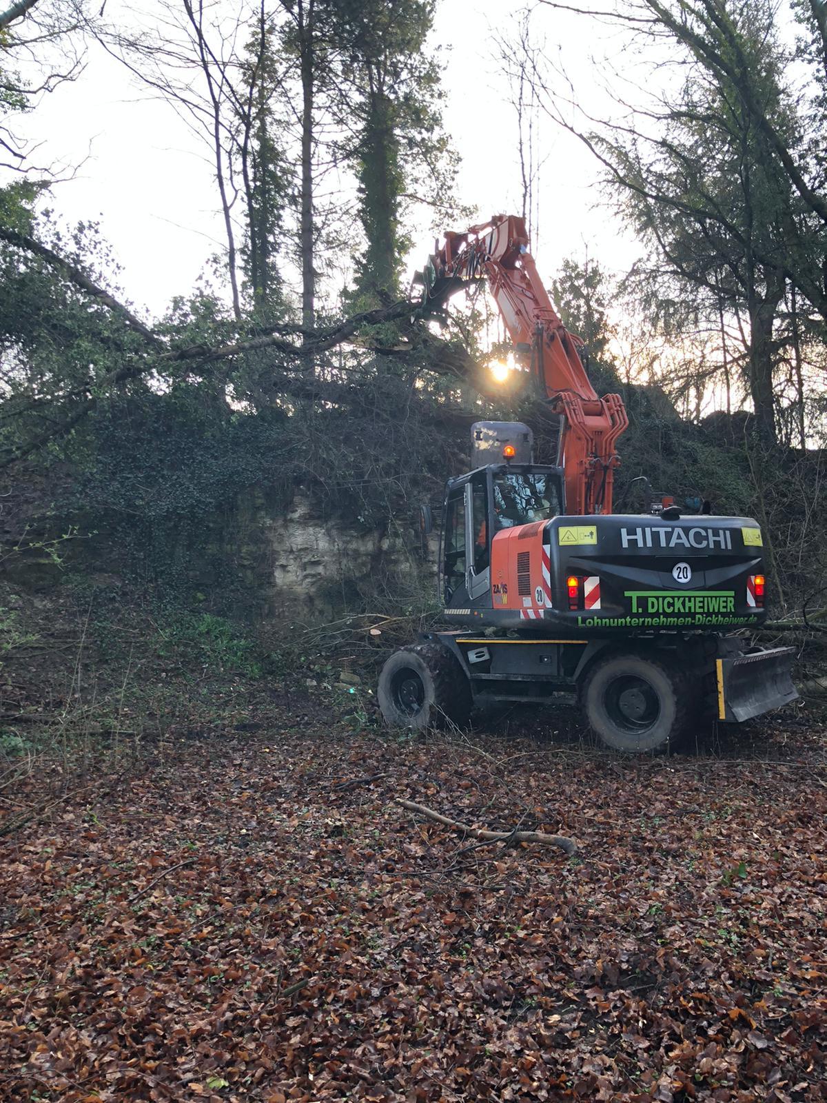 HITACHI 21 t Mobilbagger bei der Baumfällung