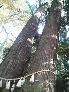 右手に杉の大木