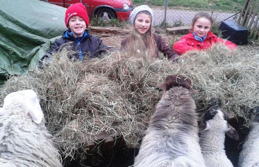 Schafe füttern (Foto: Sonja Kauffmann)