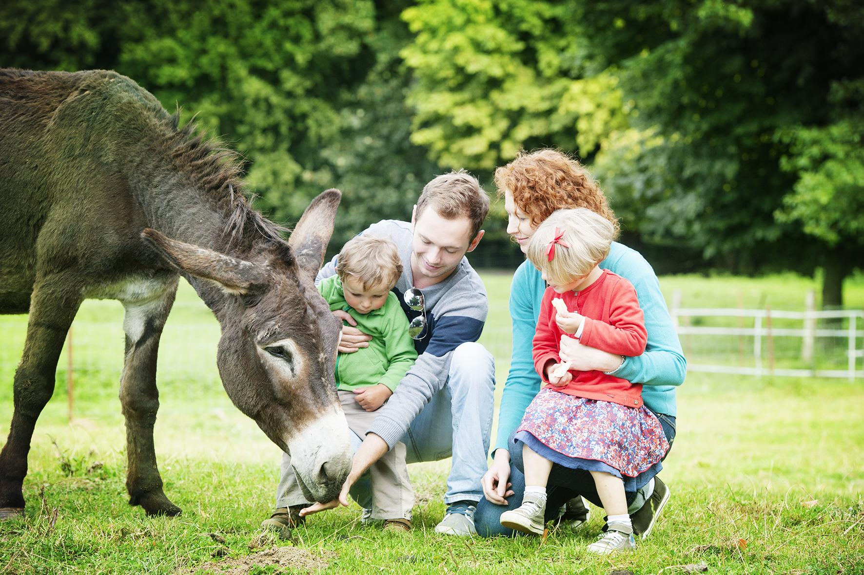 Contact avec les animaux sans distance pendant vos vacances