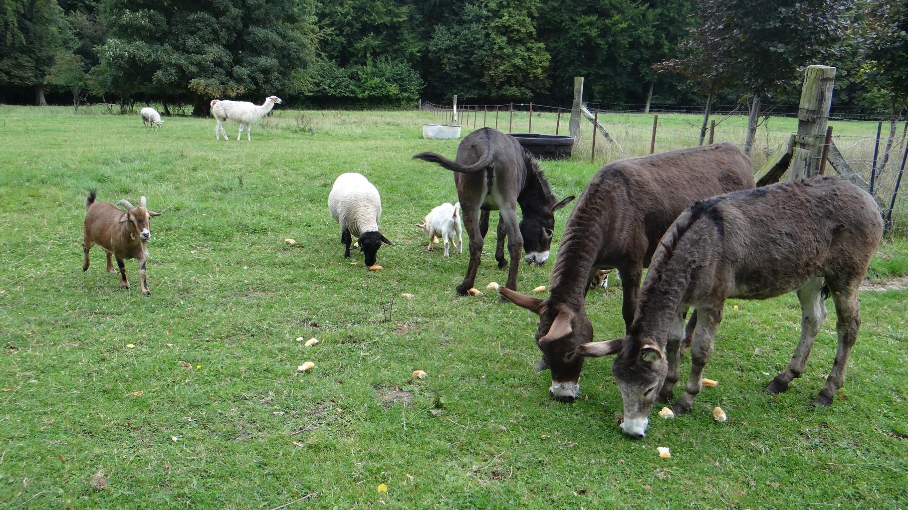 Les animaux dans le camping en Baie de Somme