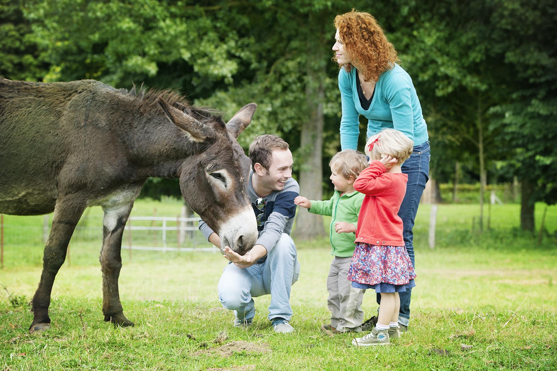Profiter un séjour insolite en famille avec les animaux dans le camping