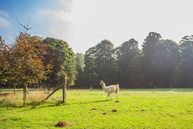 Réserver un séjour insolite avec les animaux dans le camping