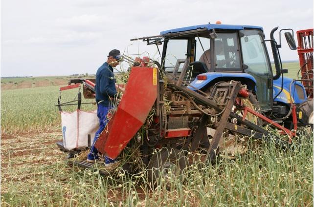 Sarımsak hasat makinesinin yan görünümü
