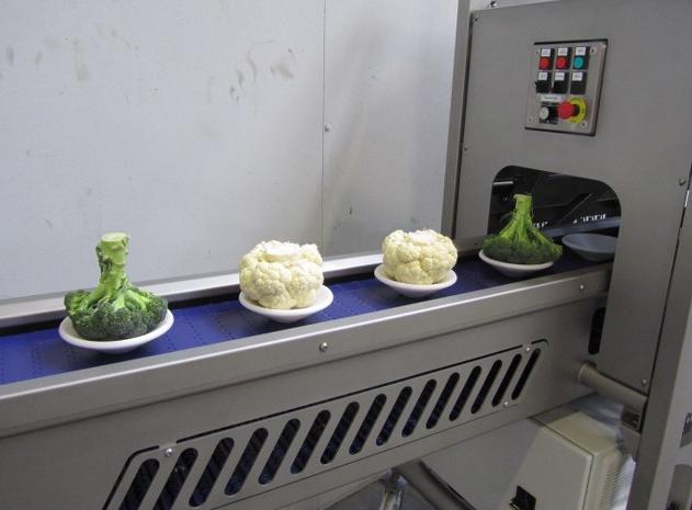 karnıbahar, brokolinin kesim makinesine girişi