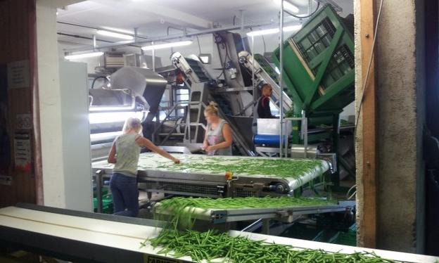 Yeşil Fasulye Makineleri