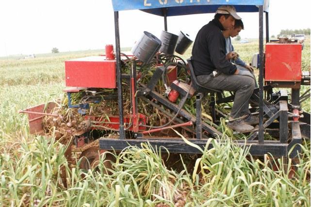 Demetli sarımsak hasat makinesi yan görünümü