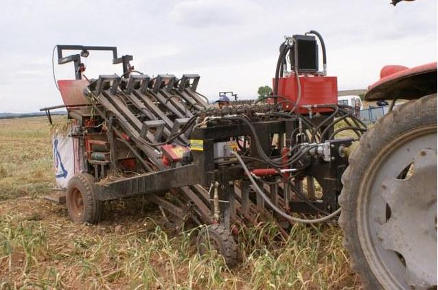 Sarımsak hasat makinesi yaprakları keserek topluyor