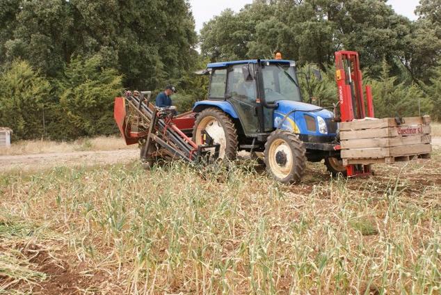 Keserek sarımsak hasatı yapan makinenin tarlada çalışma düzeni