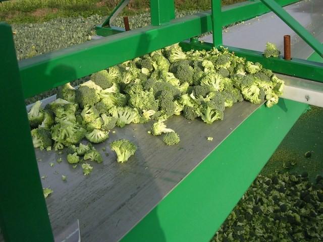 Brokoli, Karnıbahar, Salata Parçalama Makineleri
