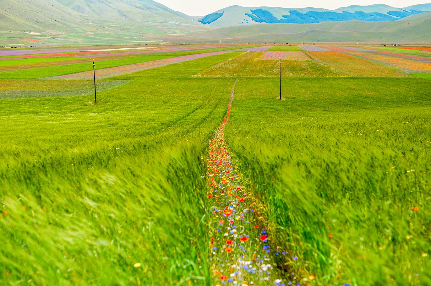 sentiero di fiori - monti Sibillini