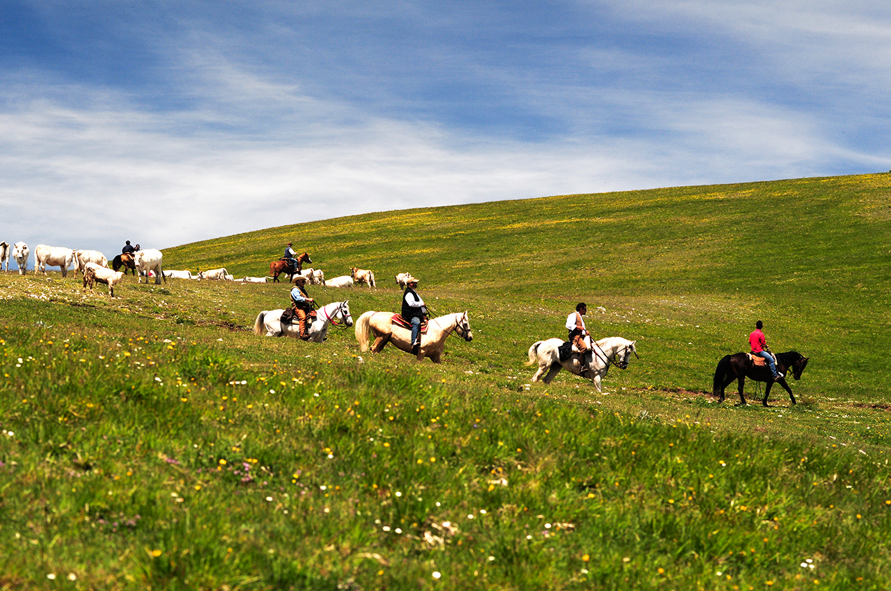 cow boys dei Sibillini