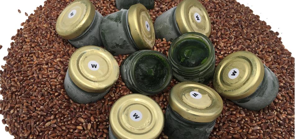 Aktion: 60€ anstatt 84€ auf unseren Bio Weizengras Rohsaft