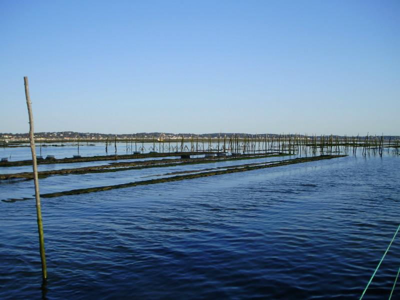 on approche des parc à huitre du bassin d'Arcachon lors de la sortie pescatourisme