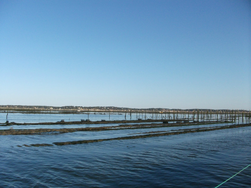 on est en vue des parcs à huitres du bassin d'Arcachon lors de la soortie pescatourisme