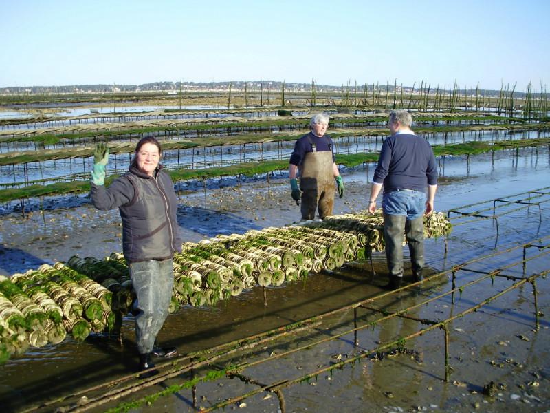 travail sur les naissains sur le parc à huitres sur le bassin d'Arcachon lors du pescatourisme
