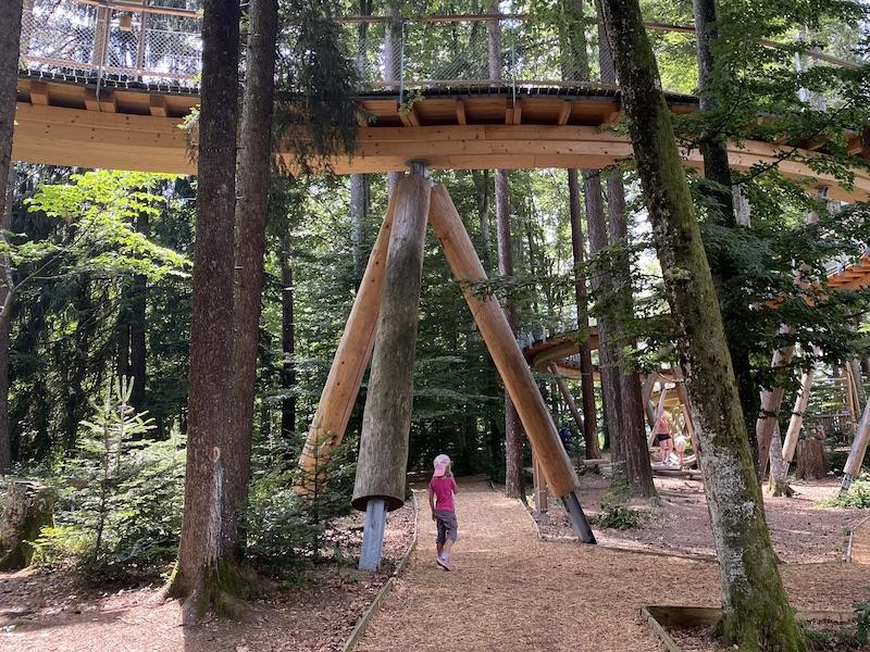 Der Walderlebnisweg befindet sich unterhalb des Baumwipfelpfads.