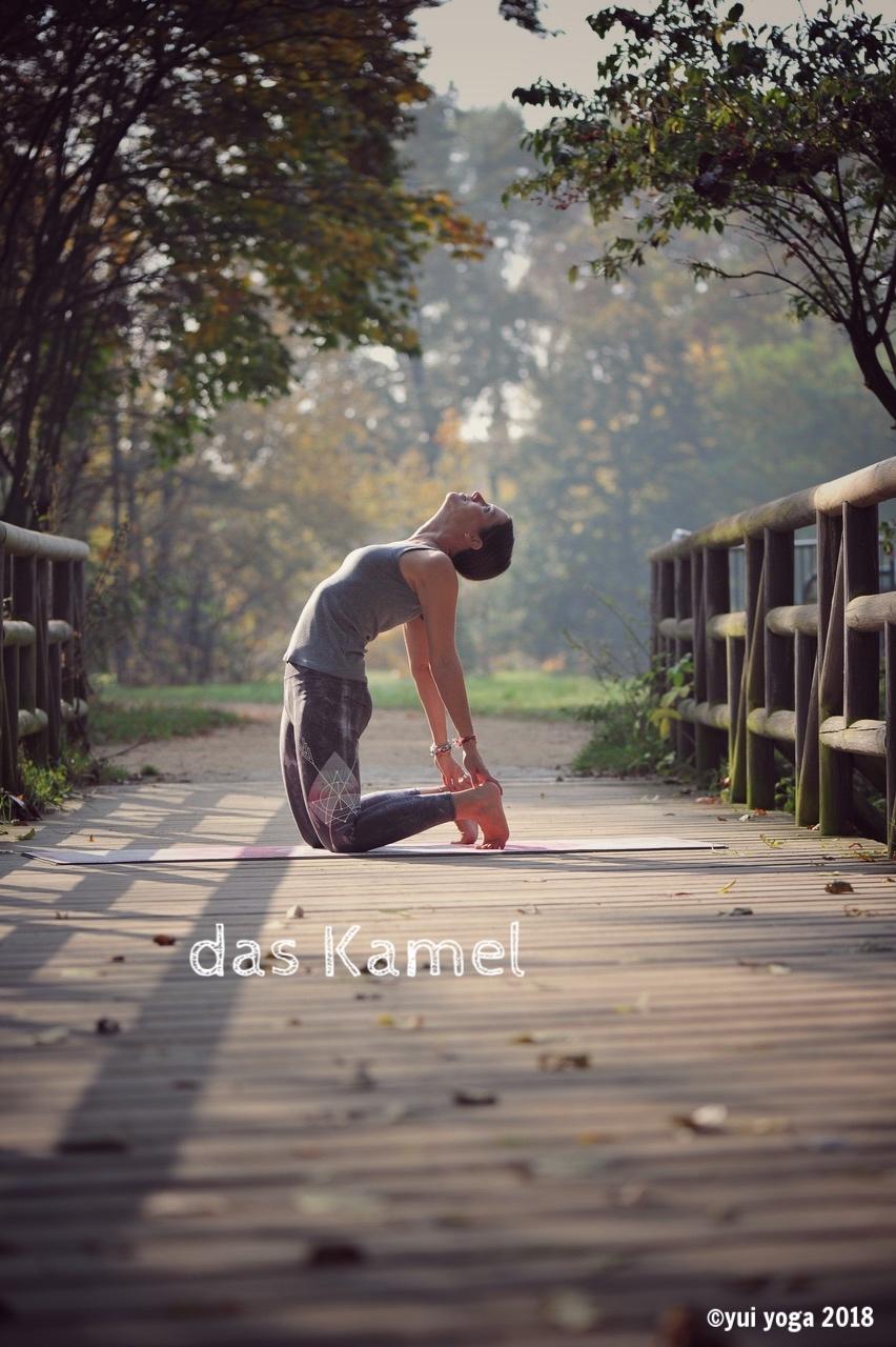 Hatha Yoga Position: Kamel