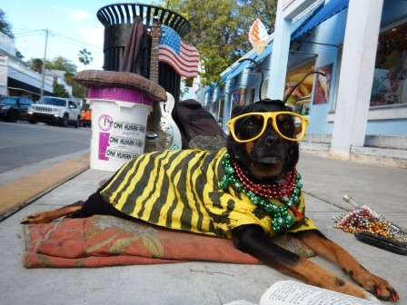 ....und auf der Straße originelle Hunde