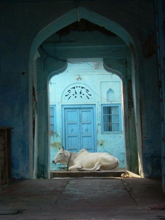 Door - Matara - Inde 2010