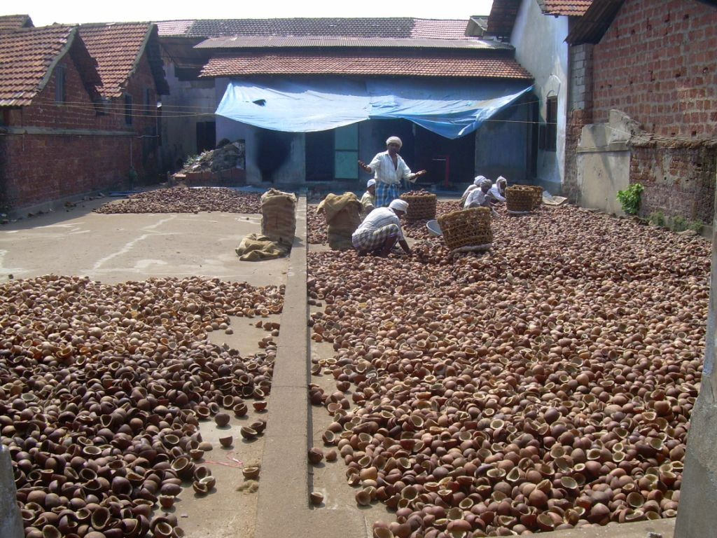 Coconuts - Kerala - Inde