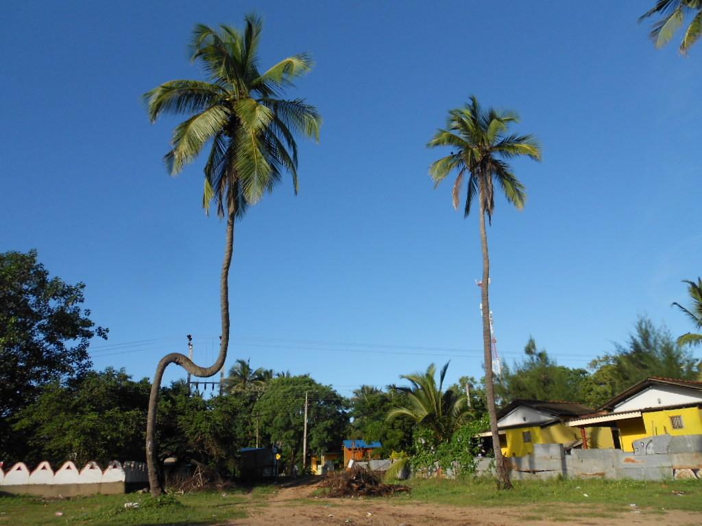 """""""N"""" - Trincomalee - Sri Lanka 2015"""