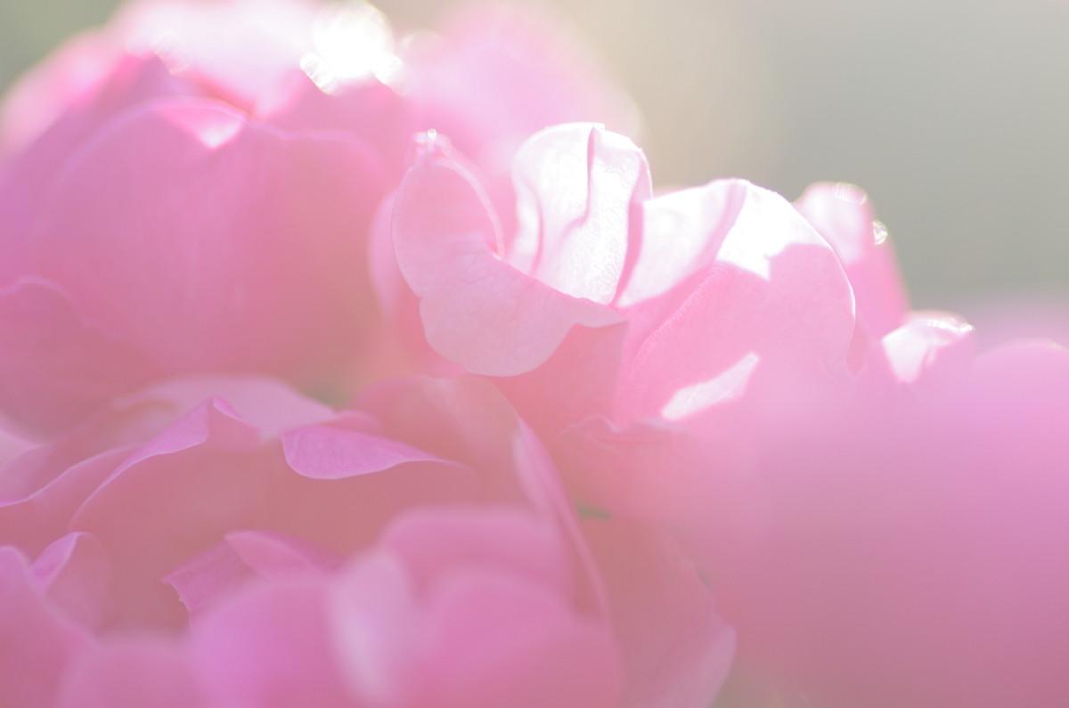 2013.05.24 薔薇(ばら)