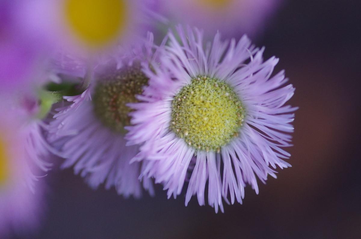 2013.04.19 春紫苑 (はるじおん)