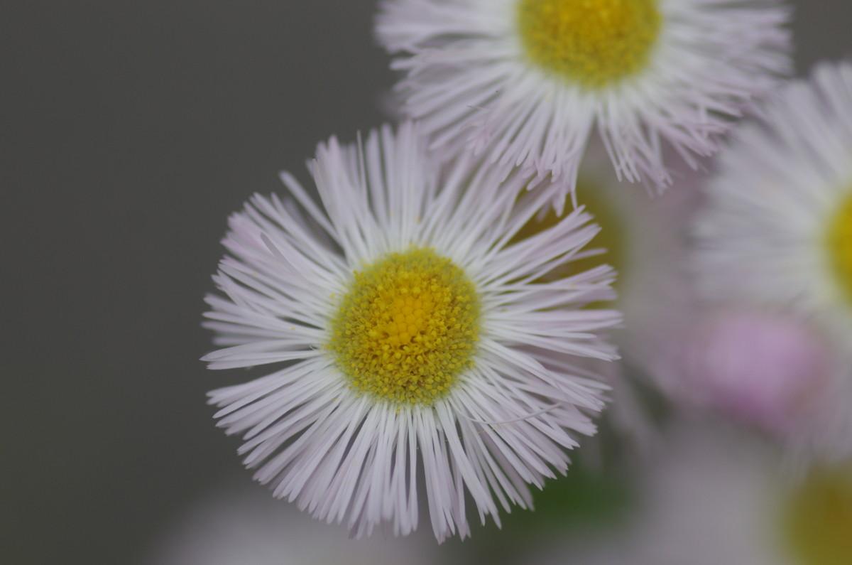 2015.05.27 春紫苑 (はるじおん)